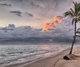 Une plage avec un cocotier et la mer au large.
