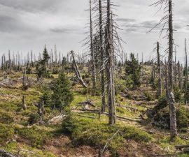 Des arbres de la forêt qui sont coupés