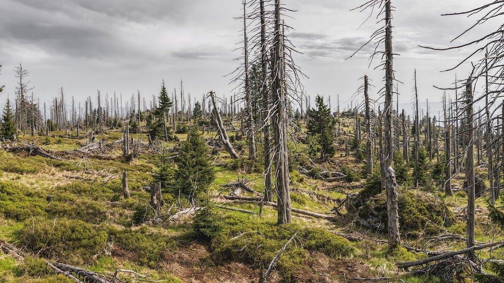 Destruction de la forêt