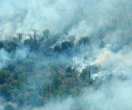 Madagascar : « Nos forêts brulent ! » un cri d'alarme ou de désarroi ?