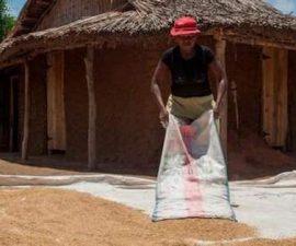 Grenier de l'Afrique : Un nouvel ordre pour un nouveau paradigme