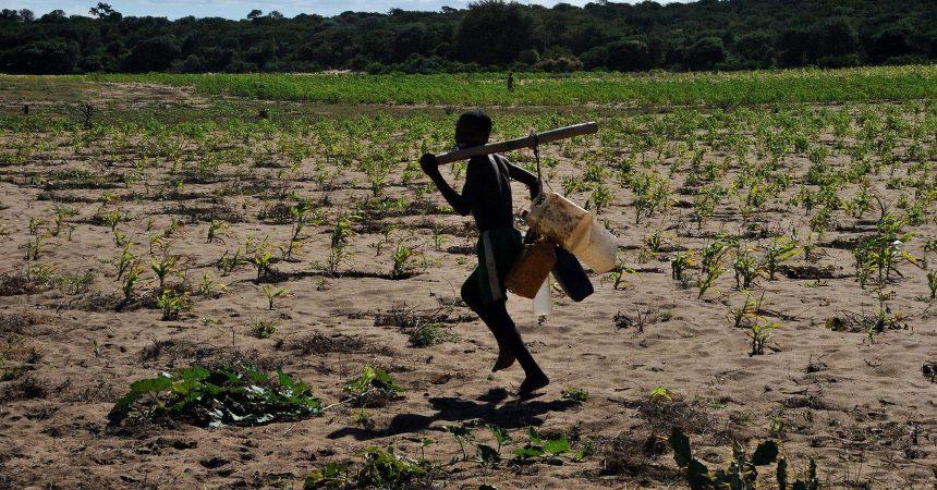 L'agriculture à Madagascar