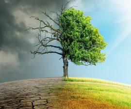 Océan indien et changement climatique : Une stratégie régionale serait-elle plus efficace ?