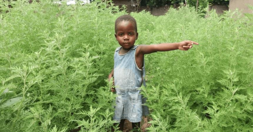 Madagascar préfère les plantes médicinales et n'achètera pas du Vaccin anti-Covid-19